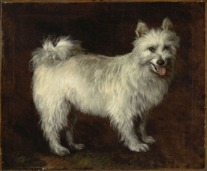 Gainsborough_Spitz_Dog