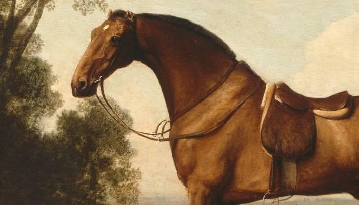 horse berger